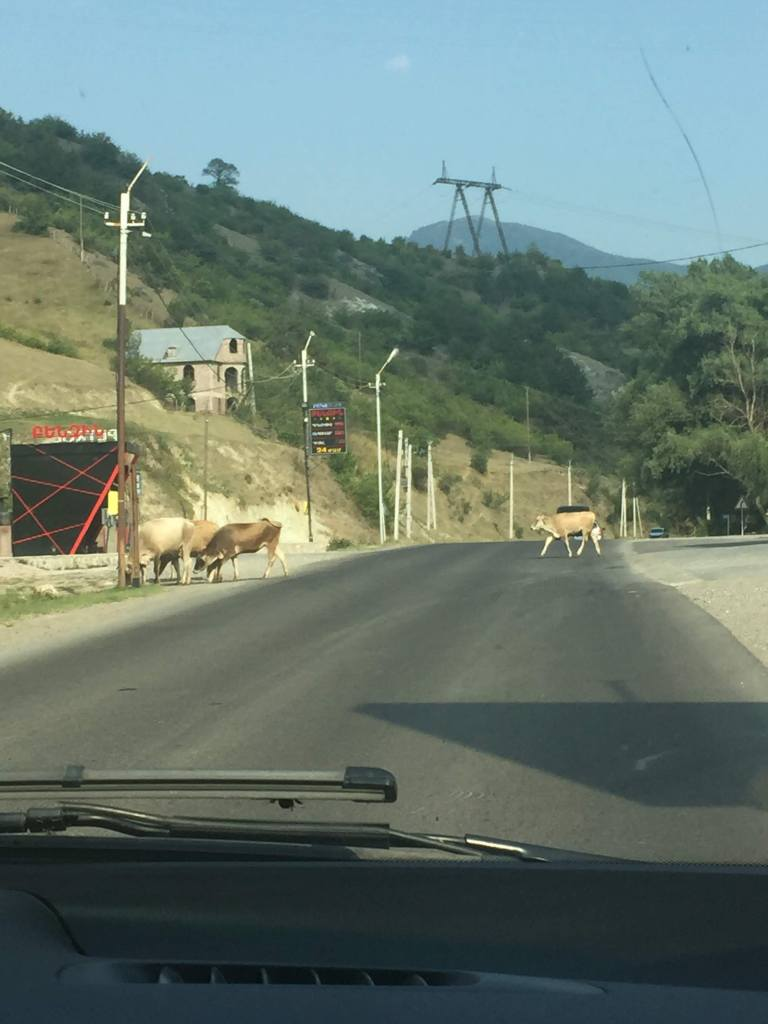 View of the mountain road with cows crossing.